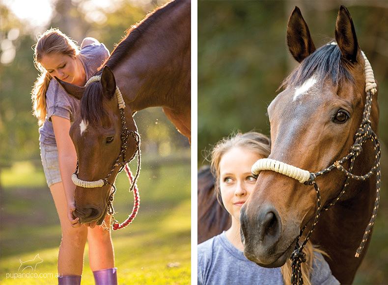 Toby, bay thoroughbred gelding | Brisbane horse portraits